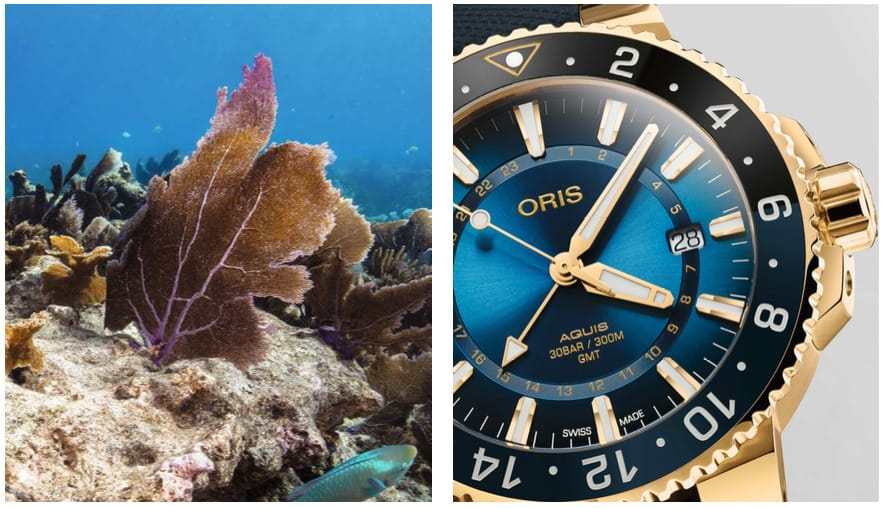 Oris Carysfort Reef Gold Limited Edition - Front